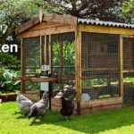 Win a chicken Coop 2020 Competition