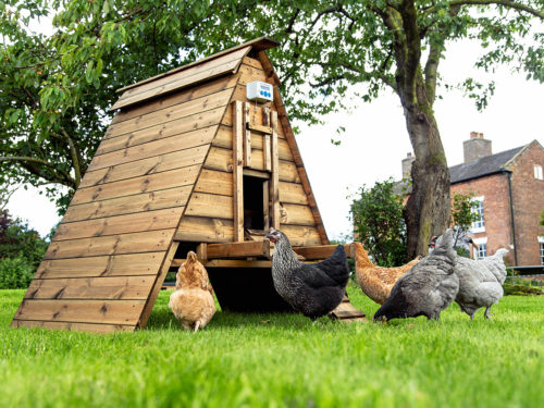 A guide to the best chicken houses and coops