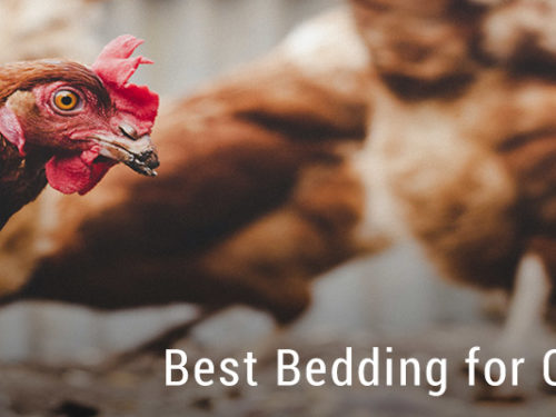 Best Bedding for Chickens?