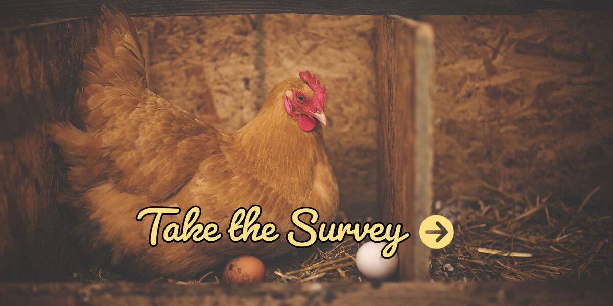Winchester University Chicken Ownership Survey